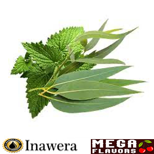 EUCALYPTUS WITH MINT - INW